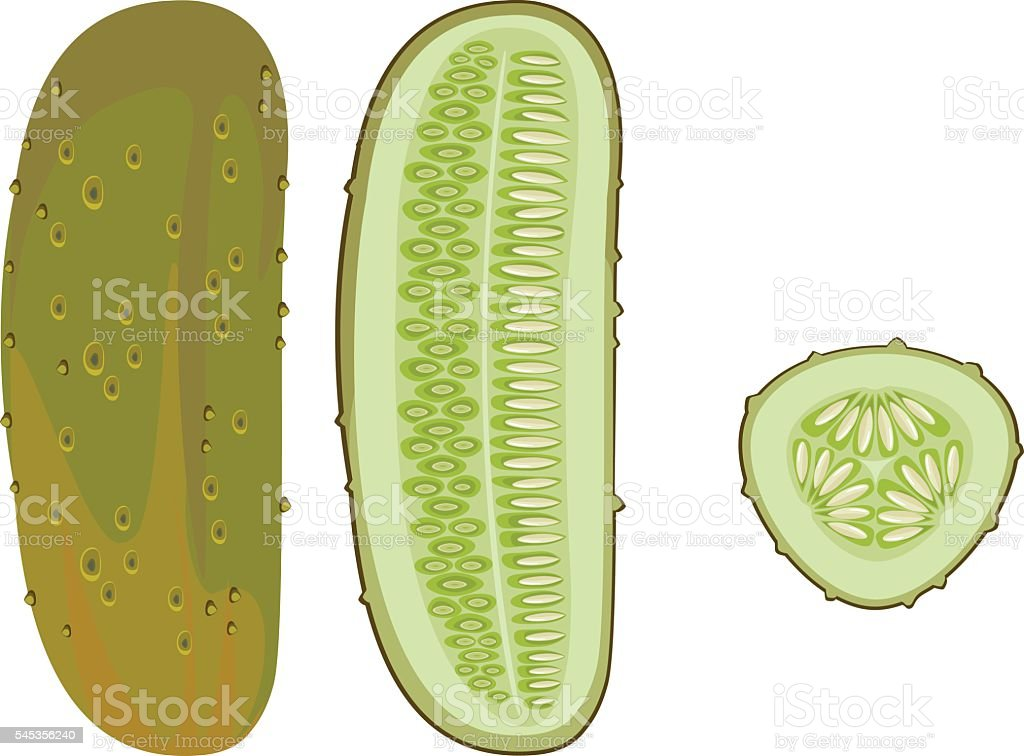 overripe сucumber and slice vector art illustration