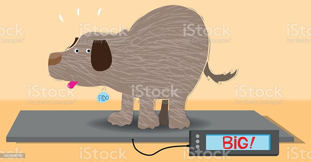 Overweight dog on an animal weight scale vector art illustration