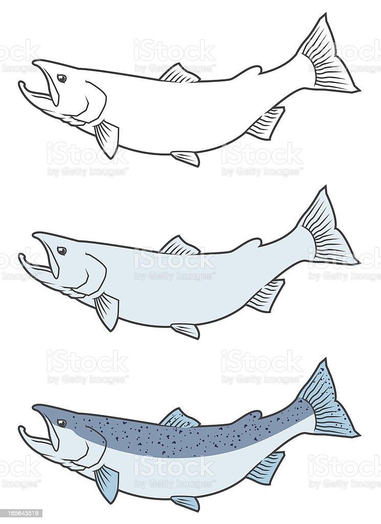 Pacific Salmon royalty-free stock vector art
