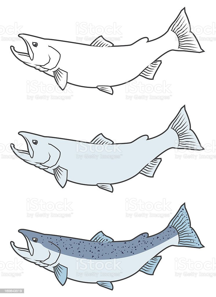 Pacific Salmon vector art illustration