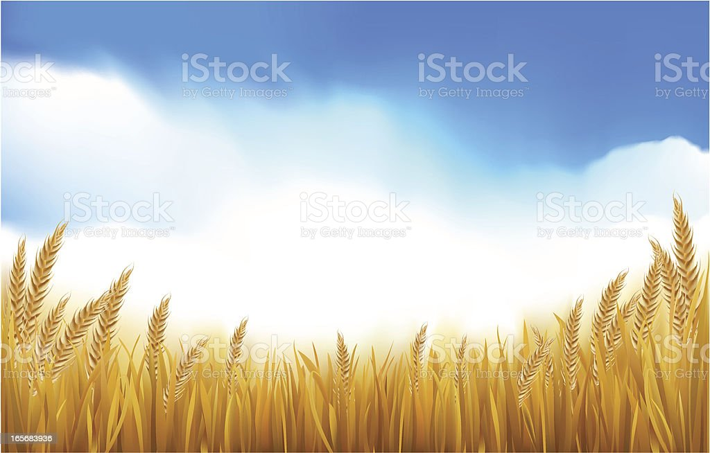 Paddy or Grain Field vector art illustration