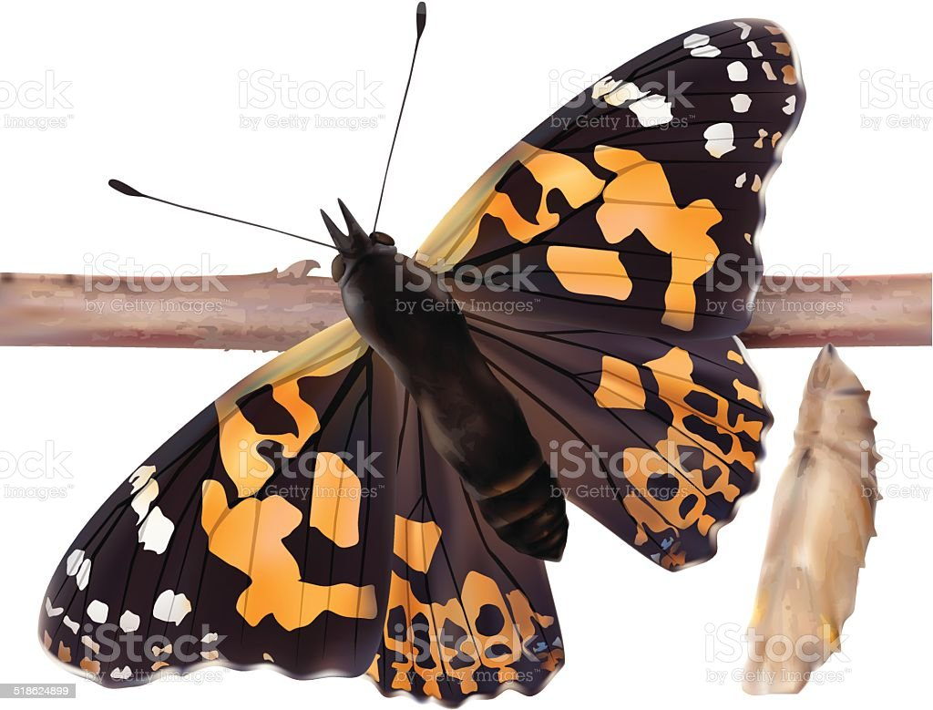 Painted Lady Butterfly - Vector vector art illustration