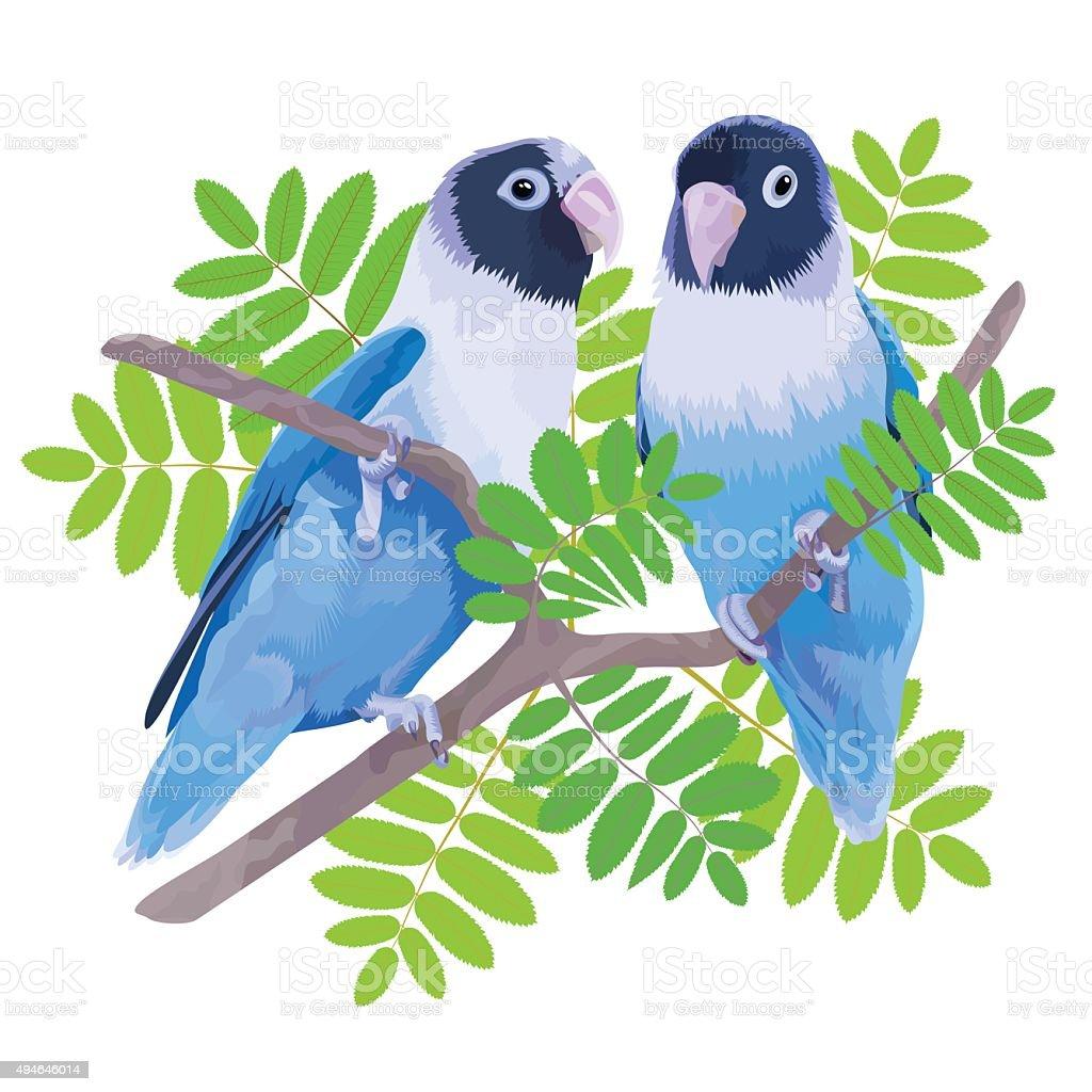 Pair of blue masked lovebirds. vector art illustration