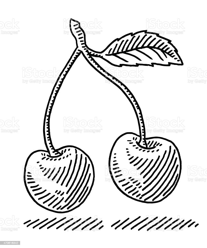Pair Of Cherry Fruit Leaf Drawing vector art illustration