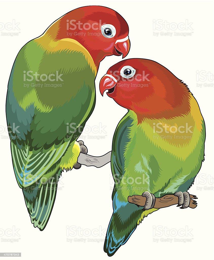 pair of fischer's lovebirds vector art illustration