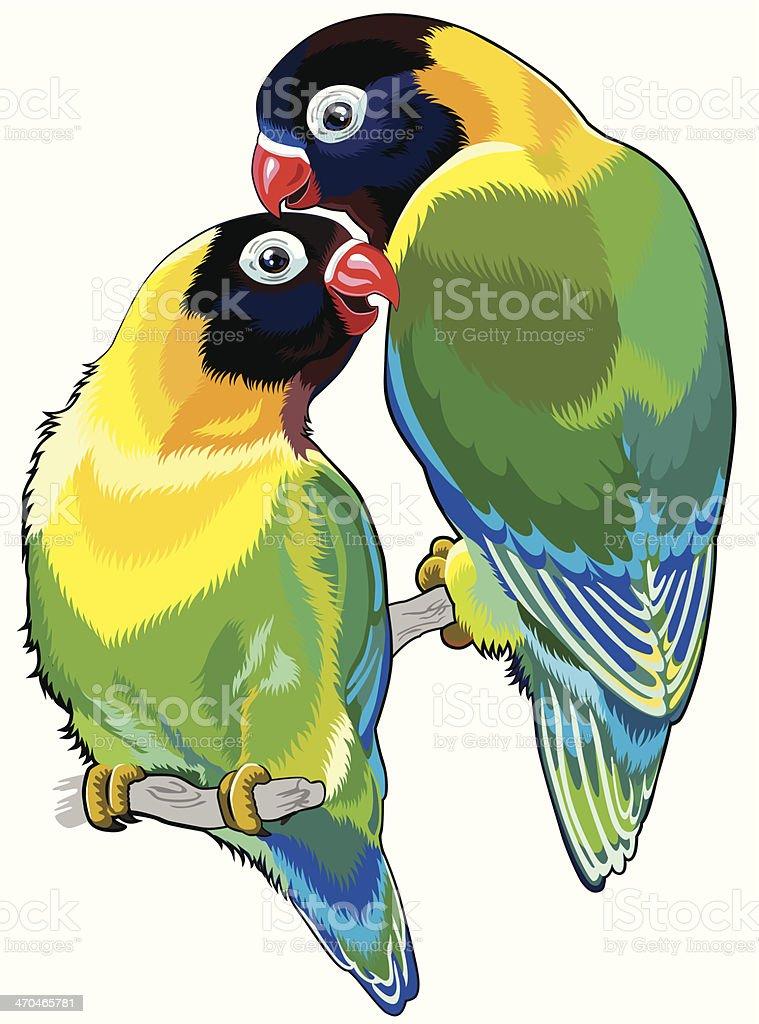 pair of masked lovebirds vector art illustration