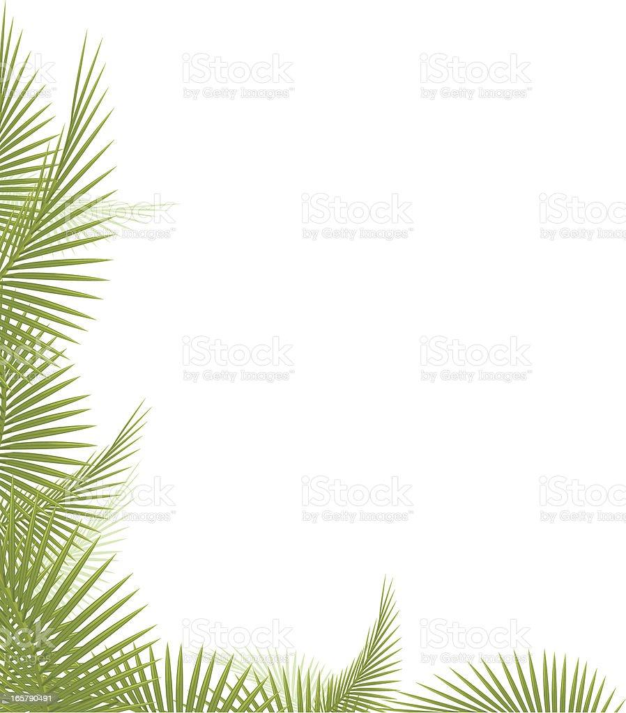 Palm Leaf vector art illustration