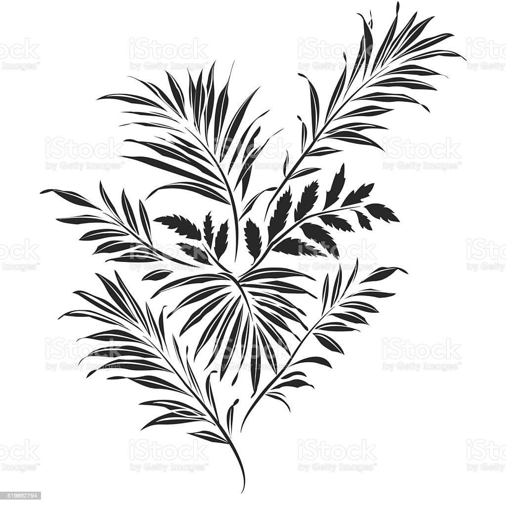 Palm leaves. Doodle style vector art illustration