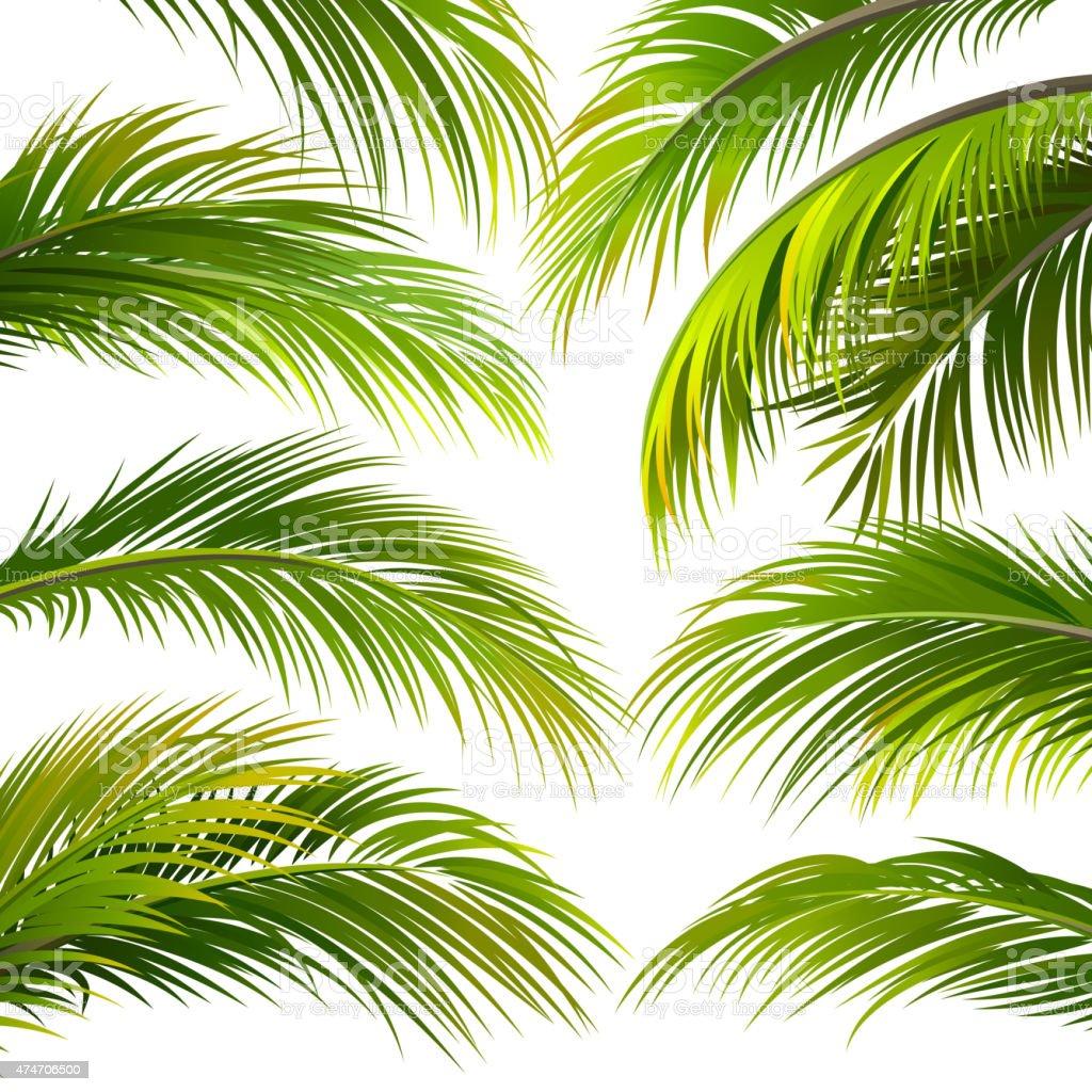 Palm leaves. Vector vector art illustration