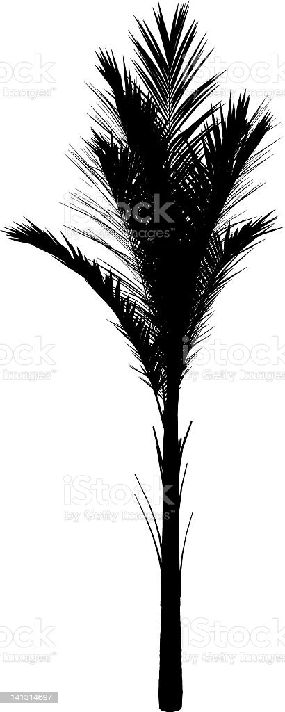 palm silhouette royalty-free stock vector art