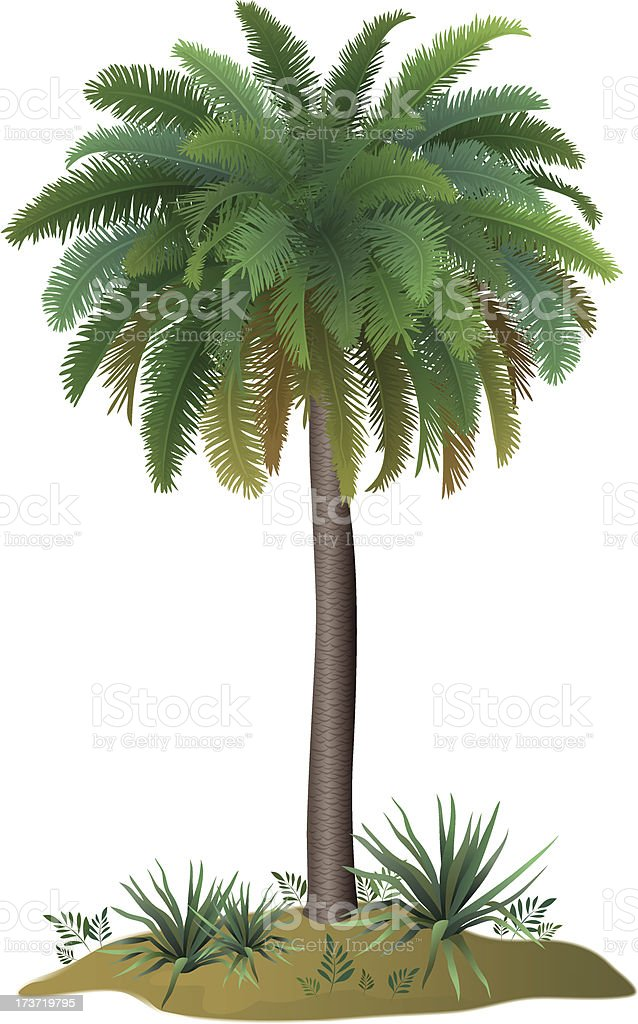 Palm tree and plants royalty-free stock vector art