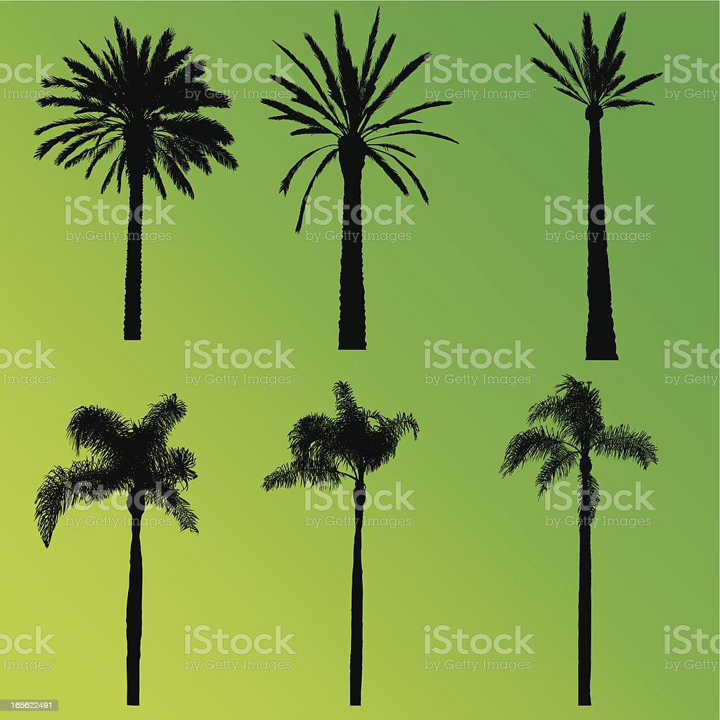 Palm Tree Collection royalty-free stock vector art