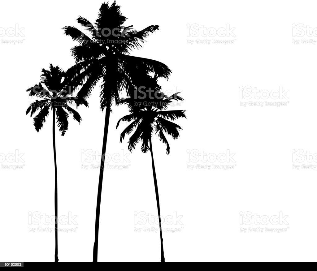 Palm tree silhouette black vector art illustration