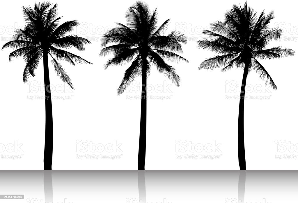 Palm Tree Silhouettes black and white vector image vector art illustration