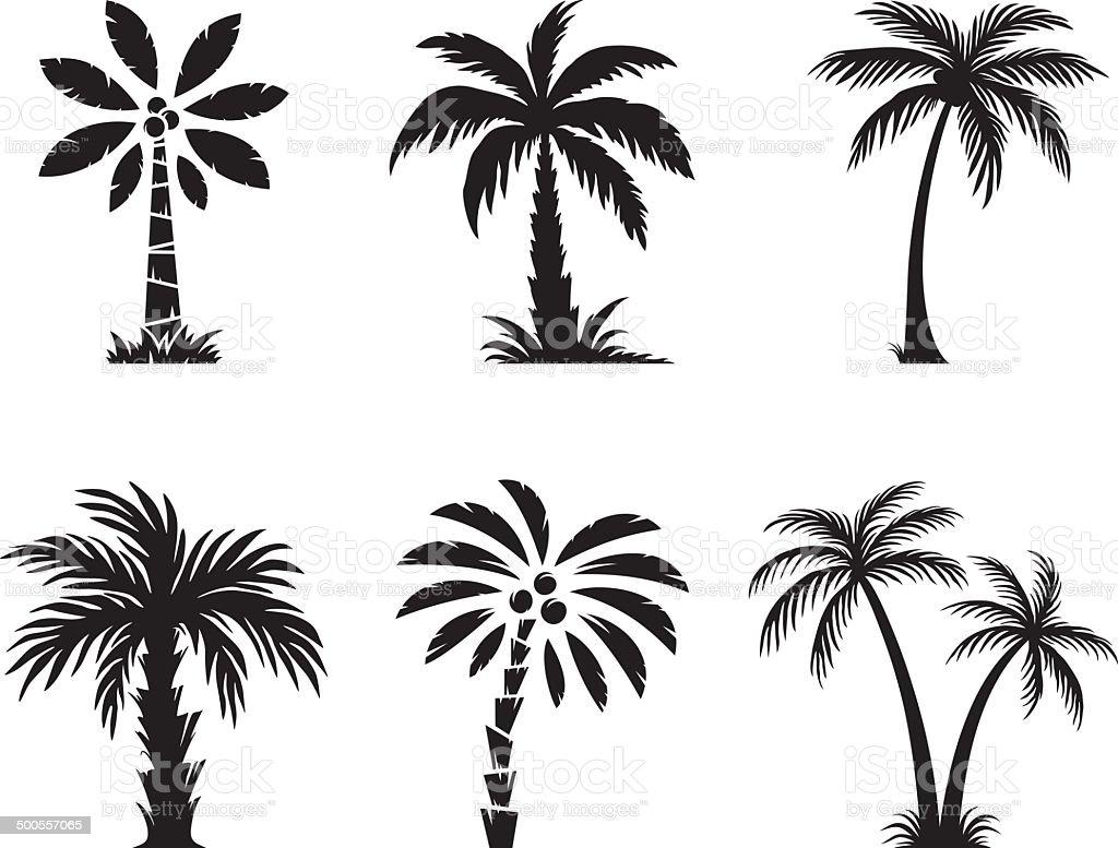 Palm tree vector art illustration