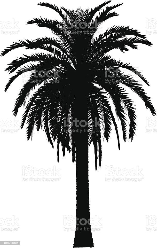 palm tree vector royalty-free stock vector art