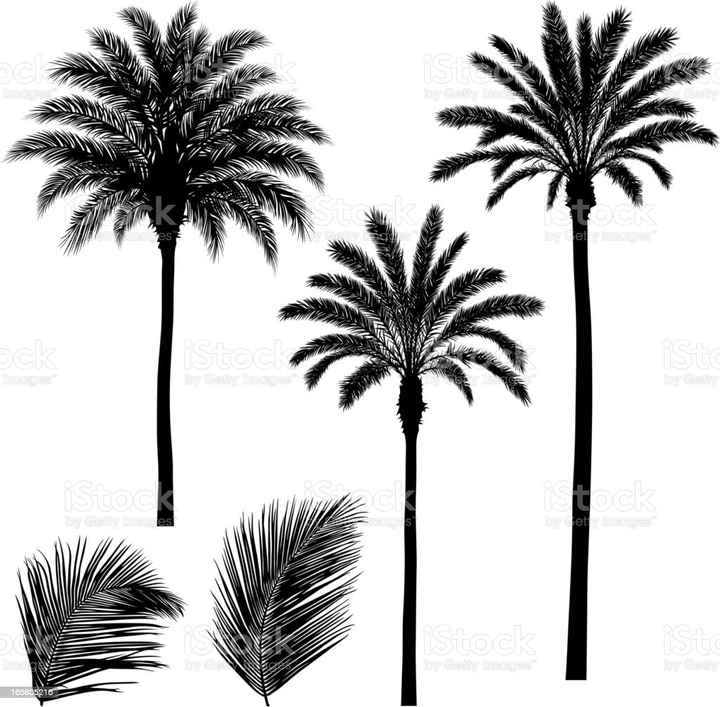 Palm trees and leaves vector art illustration