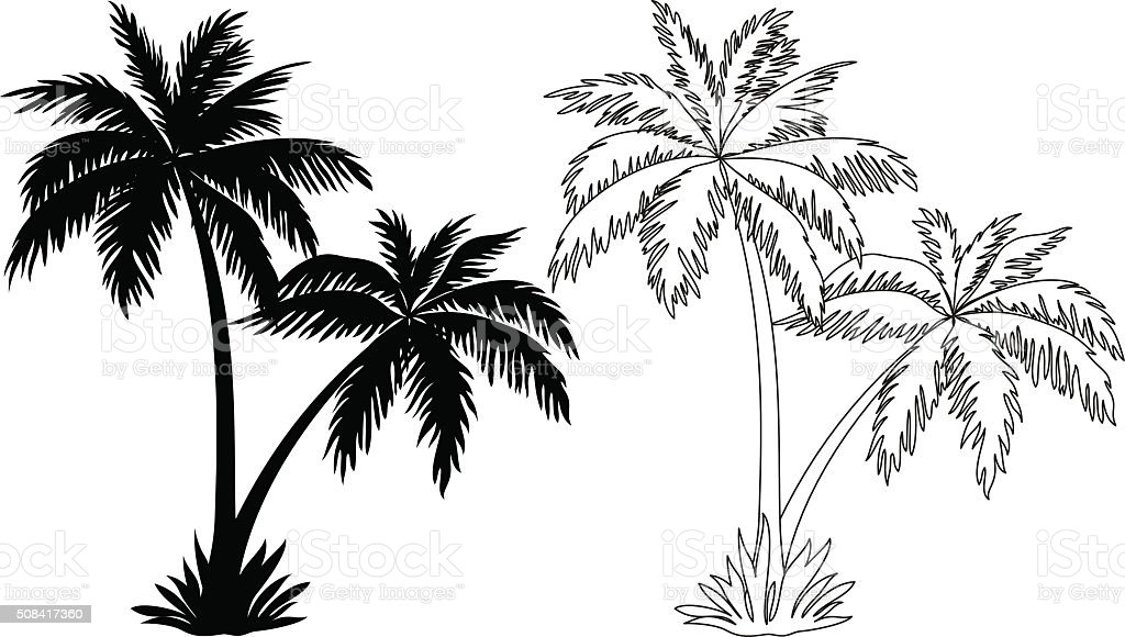 Palm Trees, Silhouettes and Contours vector art illustration