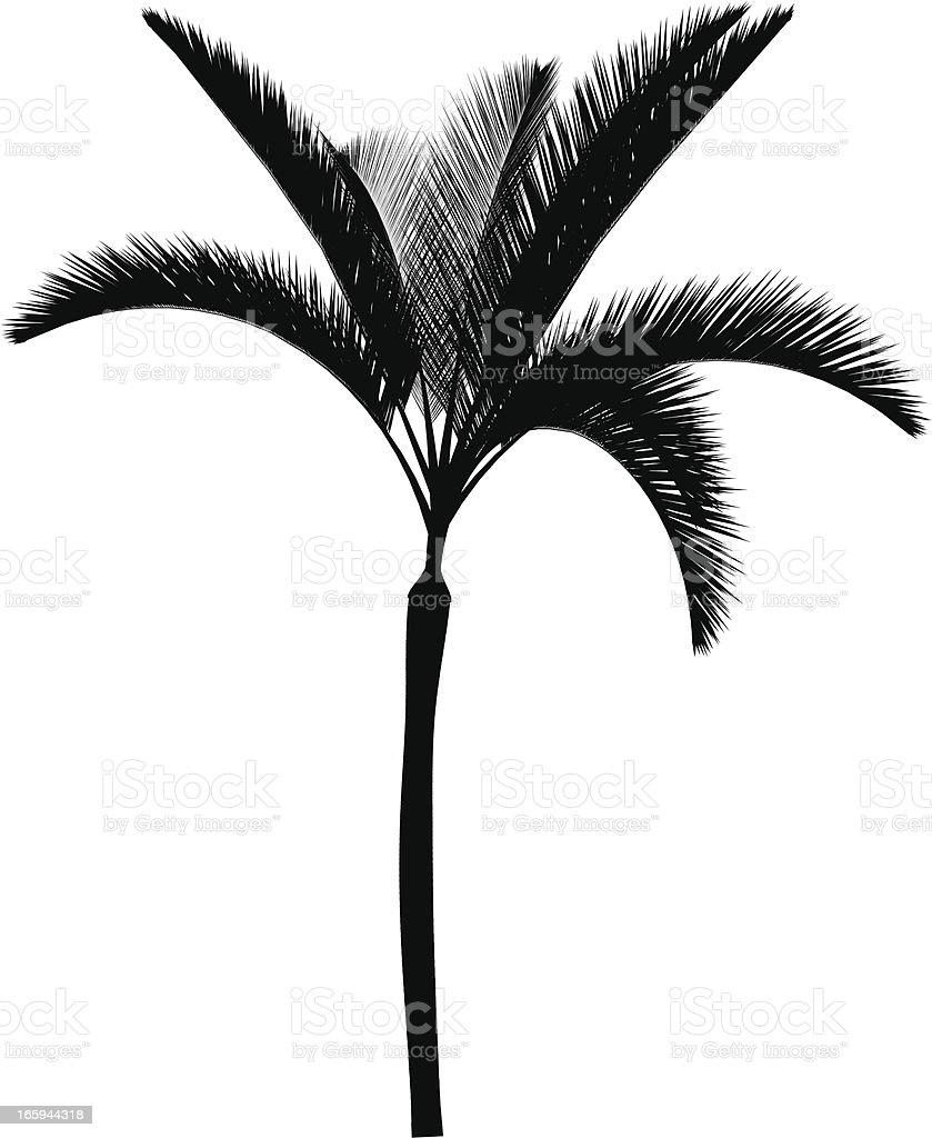 Palma vector royalty-free stock vector art