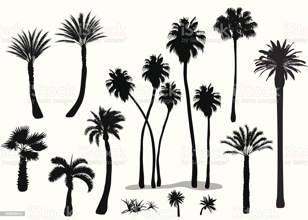 Palms Vector Silhouette royalty-free stock vector art