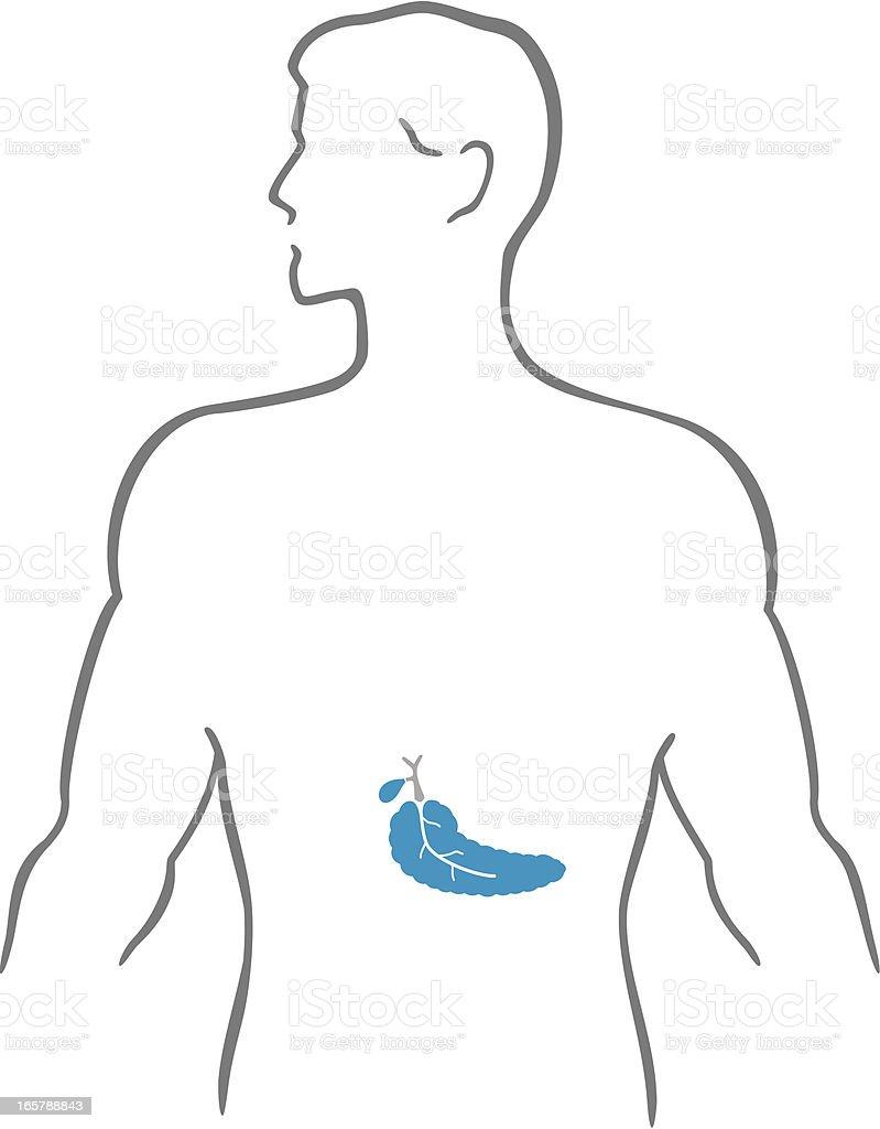 Pancreas and human body royalty-free stock vector art