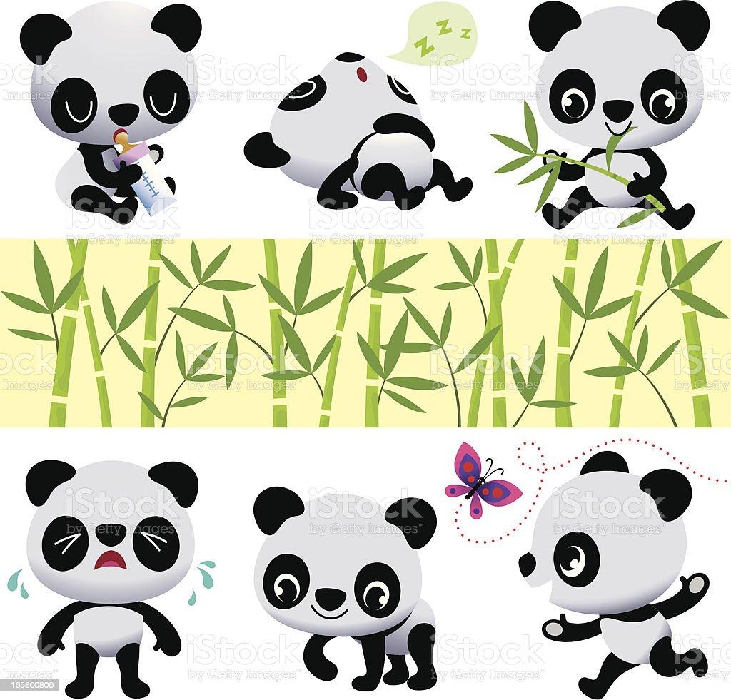 Panda Bears. vector art illustration