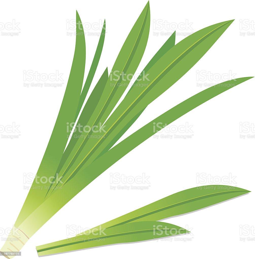Pandanus leaves vector art illustration
