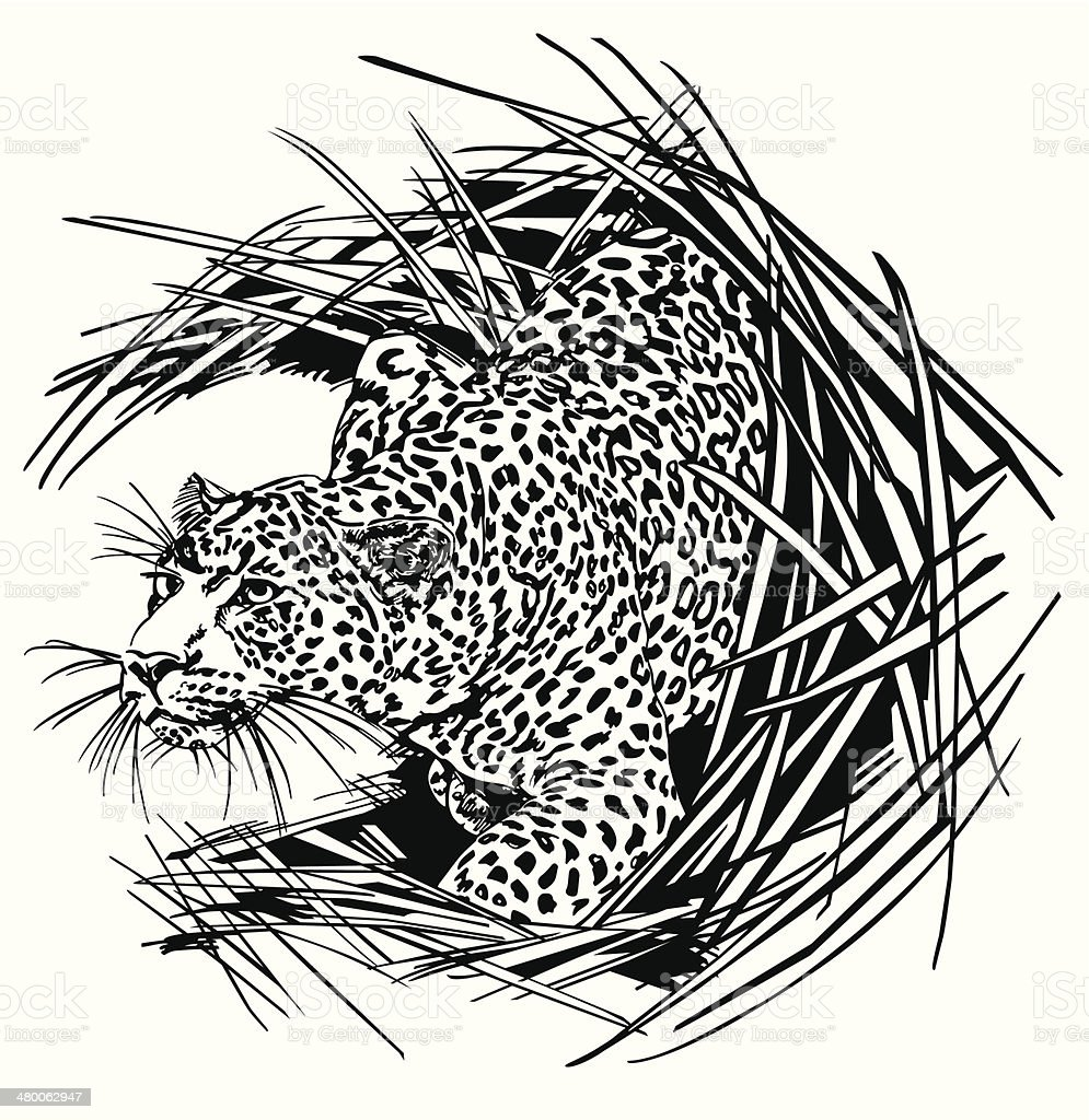 panther royalty-free stock vector art