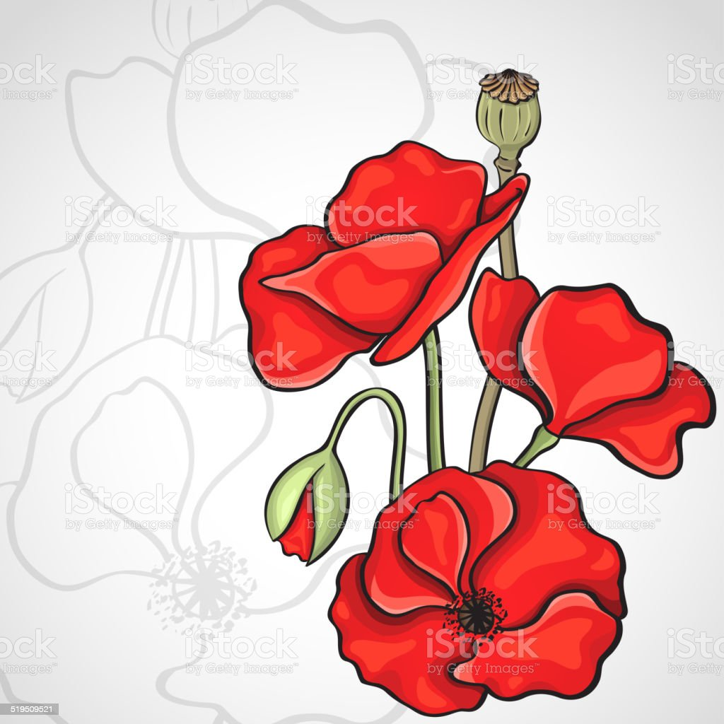 Papaver rhoeas also known as corn poppy vector art illustration