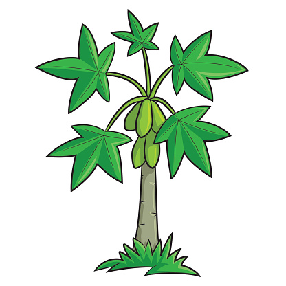 Papaya Tree Clipart