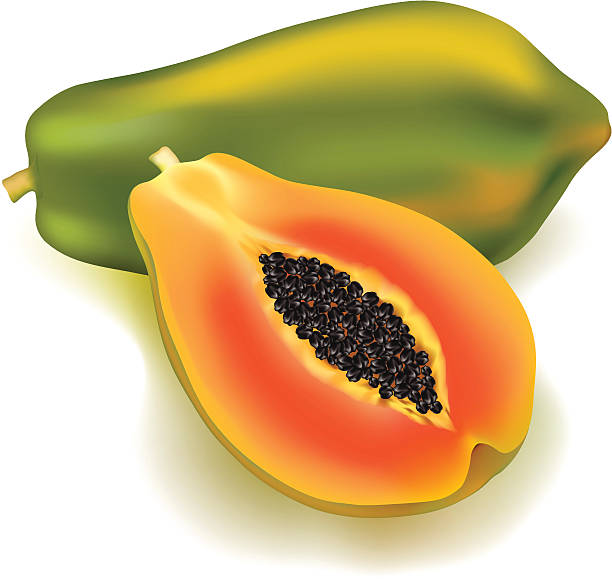 papaya clipart - photo #8