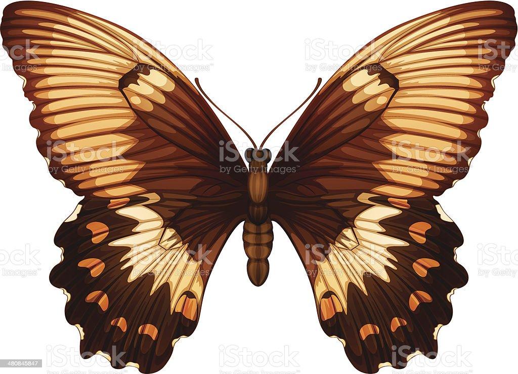 Papilio aegeus royalty-free stock vector art