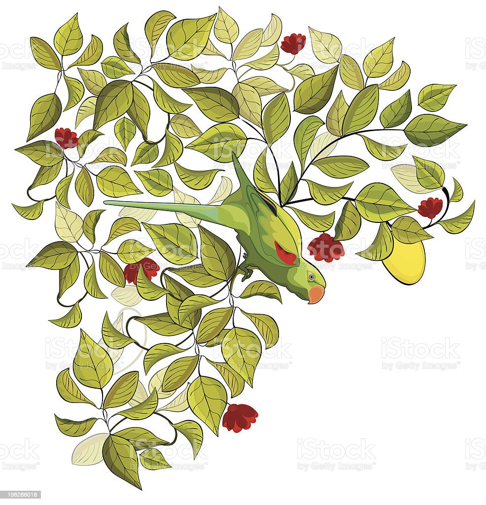 Parrot and lemon tree royalty-free stock vector art