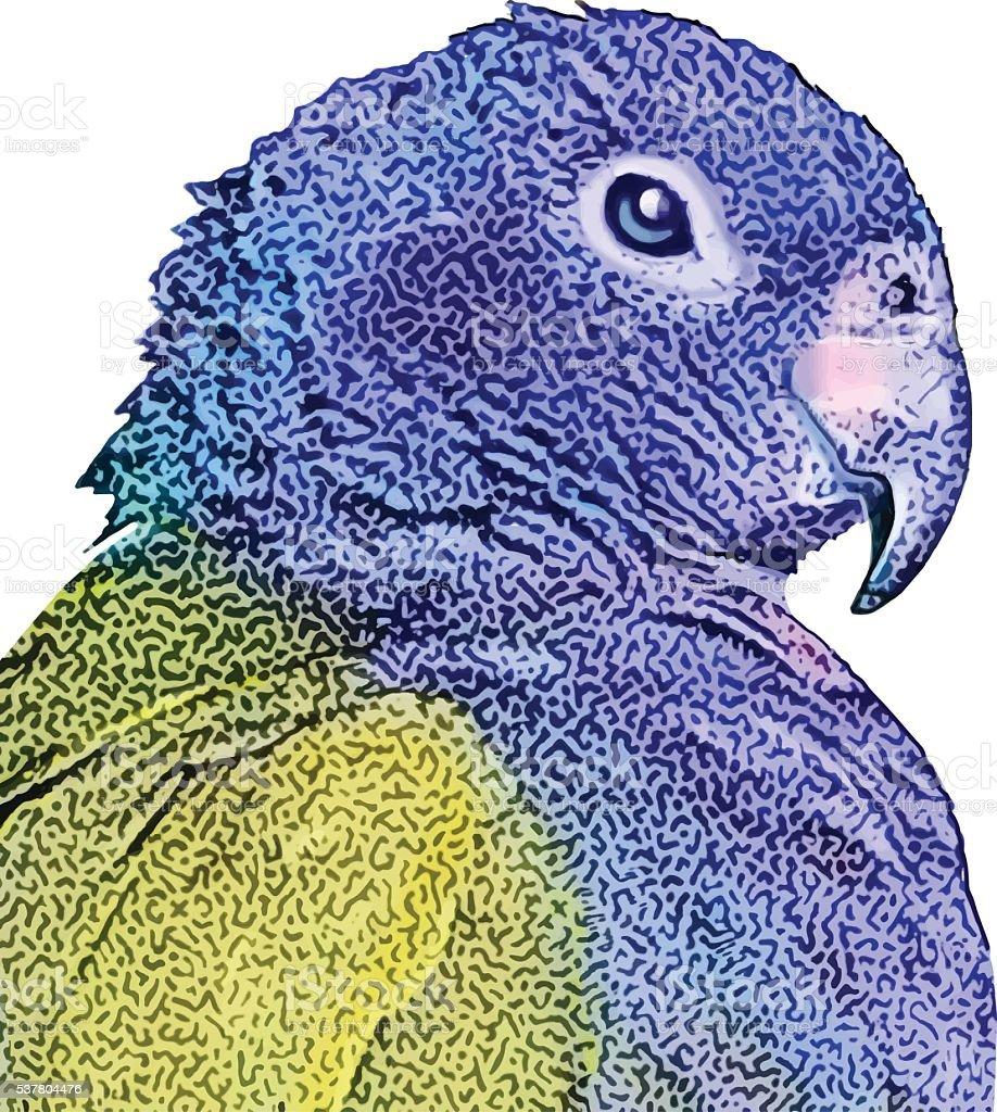 Parrot, Blue-Headed vector art illustration