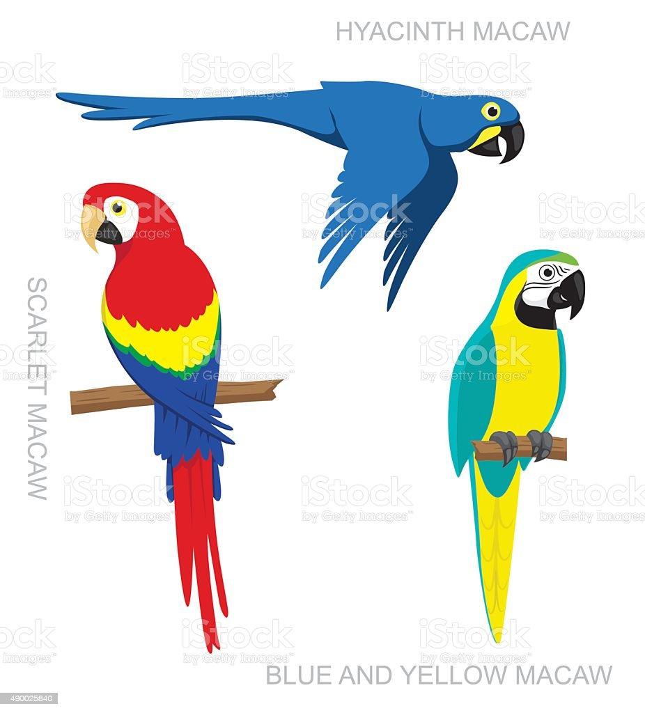 Parrot Macaw Cartoon Vector Illustration vector art illustration