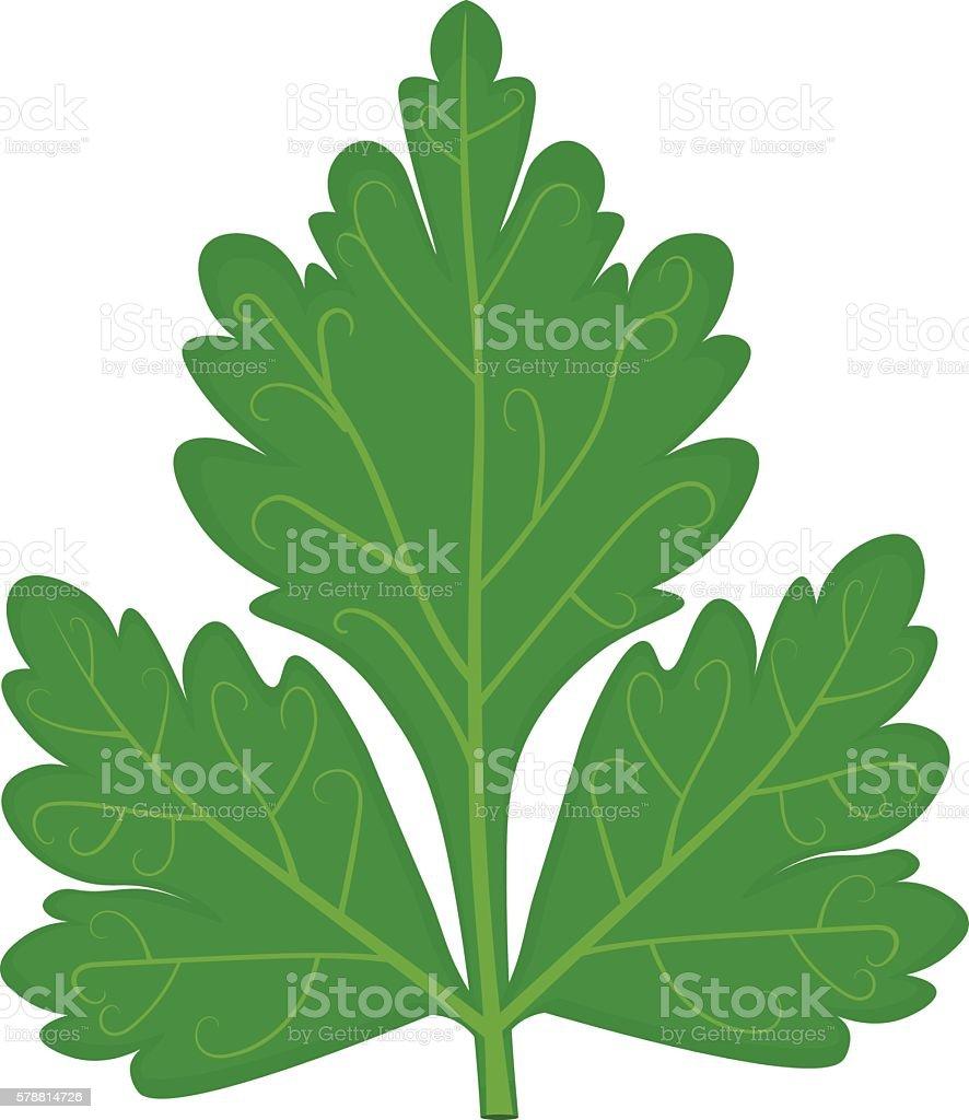 Parsley leaf vector illustration isolated on white background vector art illustration