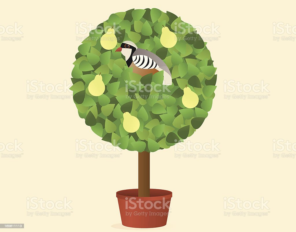 Partridge in a Pear Tree royalty-free stock vector art