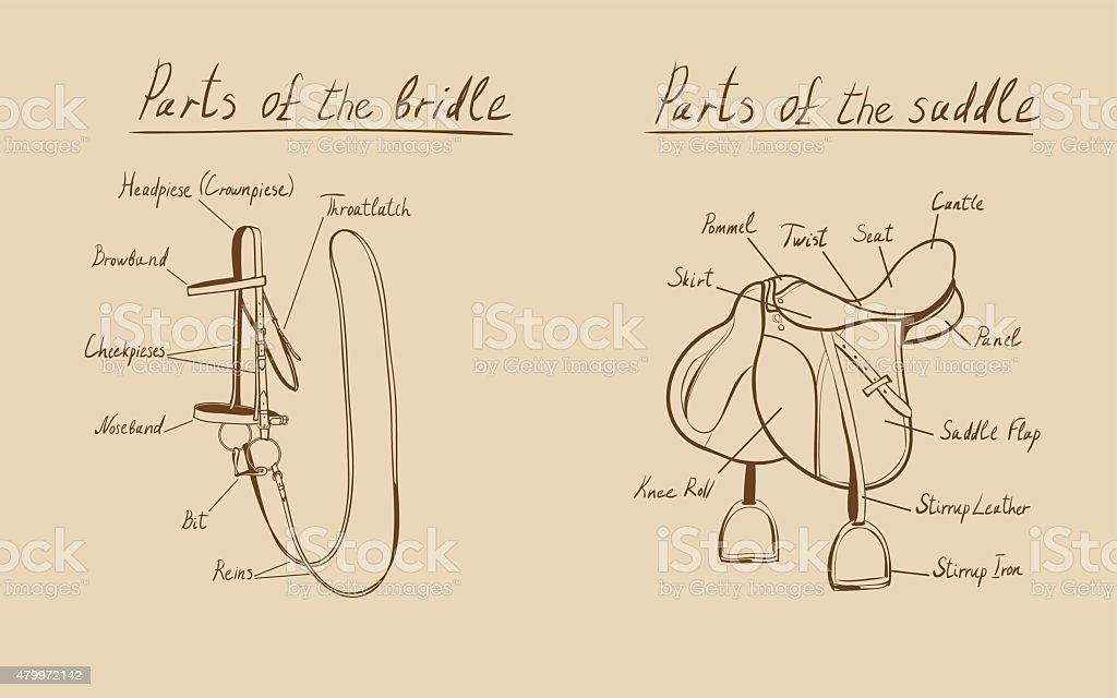 Parts of a saddle and bridle, vector vector art illustration