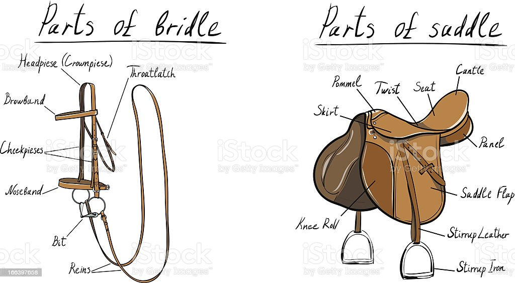 Parts of saddle and bridle vector art illustration