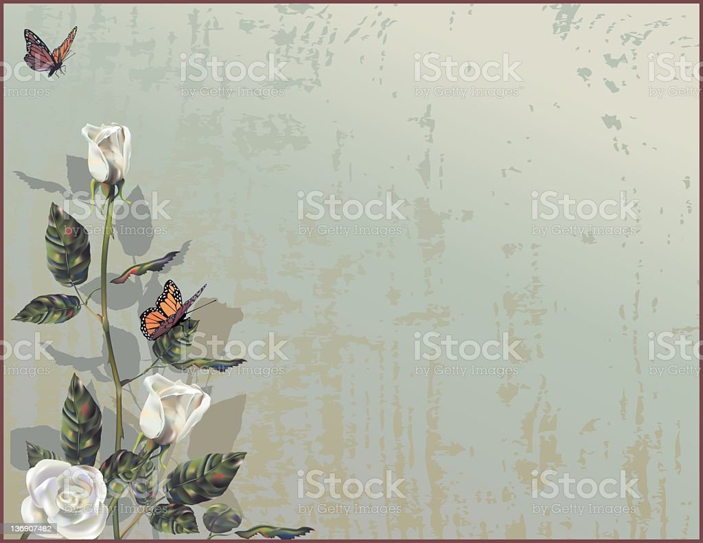 Pastel Butterflies Landing on White Roses with Grey Background stock photo