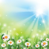 Pastel spring illustration with daisies and rays of sunshine
