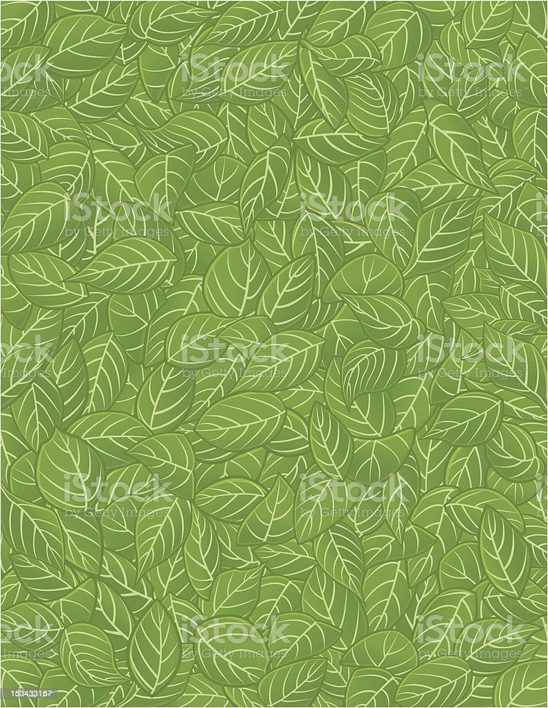 Pattern leaf / Feuilles vector art illustration