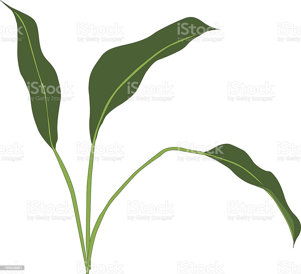 Peace lily leaves royalty-free stock vector art