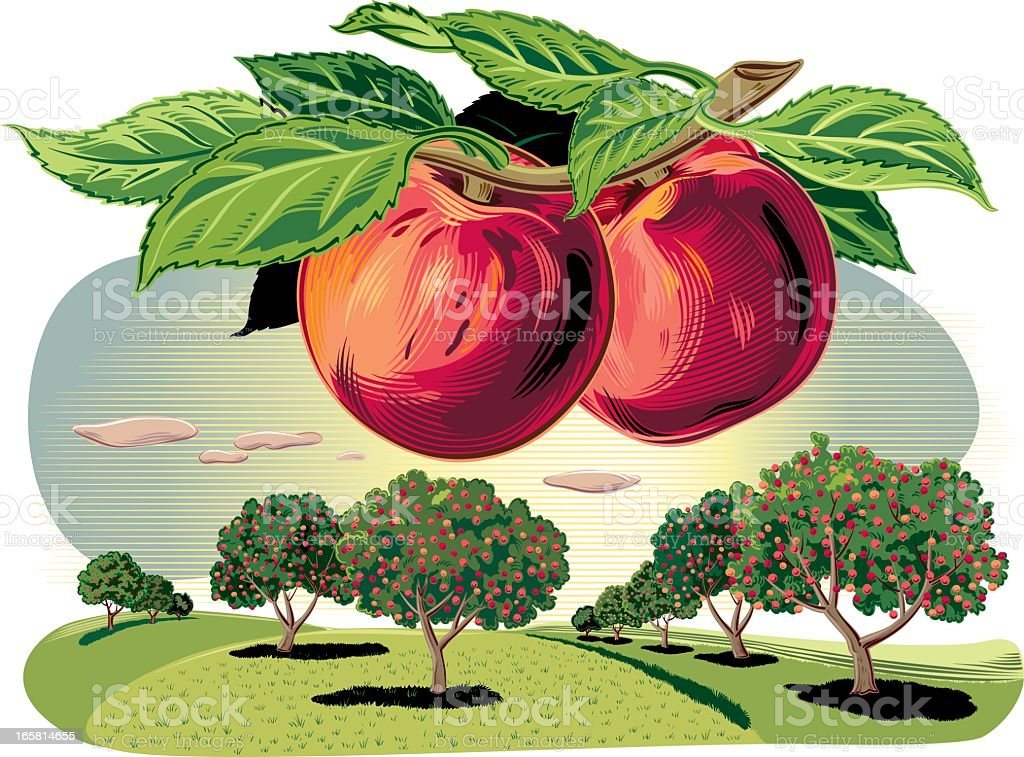 Peach trees in a landscape vector art illustration