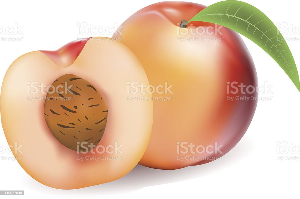 Peaches royalty-free stock vector art