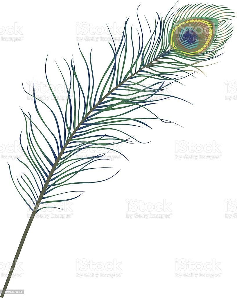 Peacock Feather vector art illustration