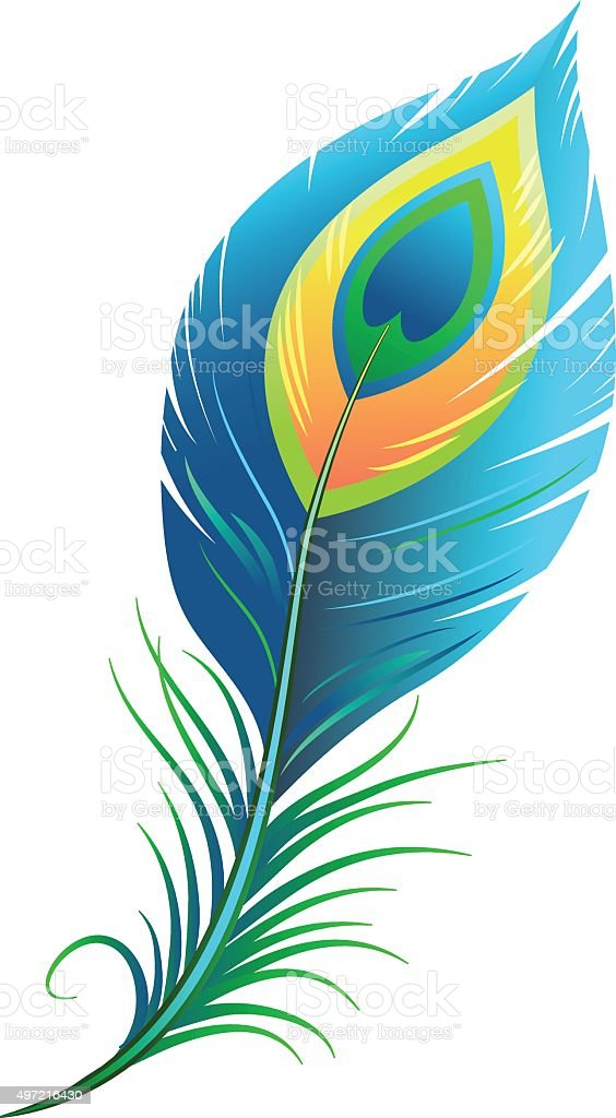 Peacock Feather Clip Art, Vector Images & Illustrations - iStock