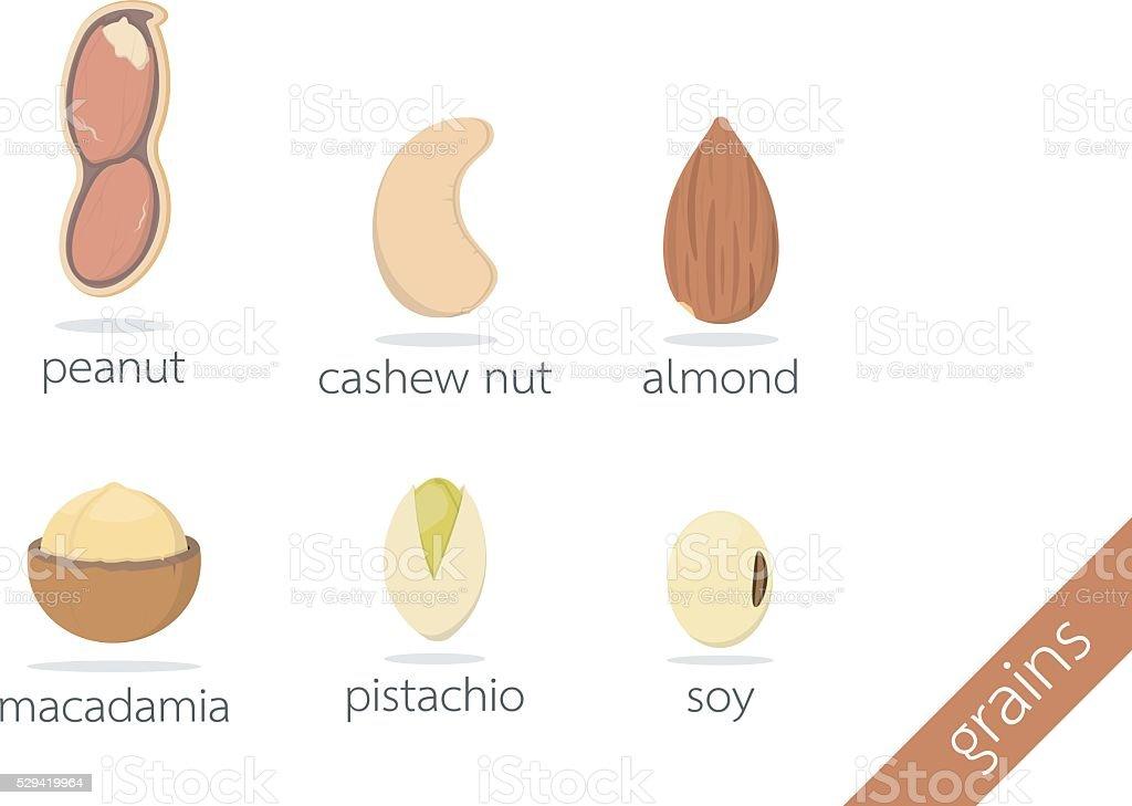 peanut cashew nut almond macadamia pistachio soy vector art illustration