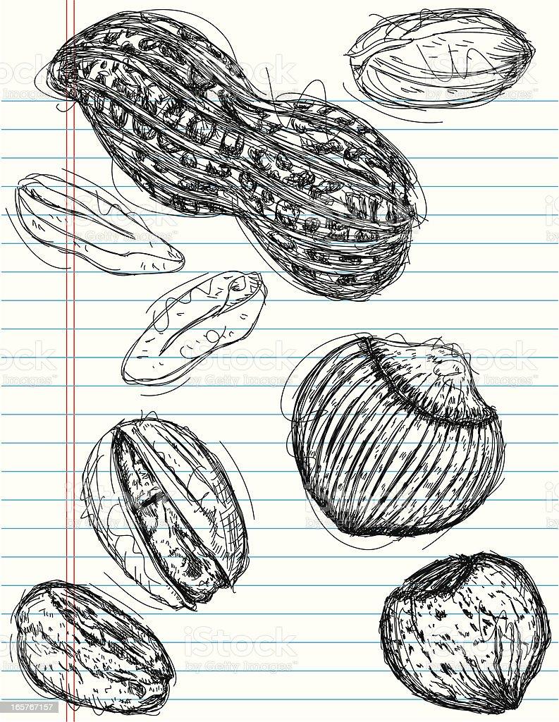 peanut, pistachio, and chestnut sketches vector art illustration