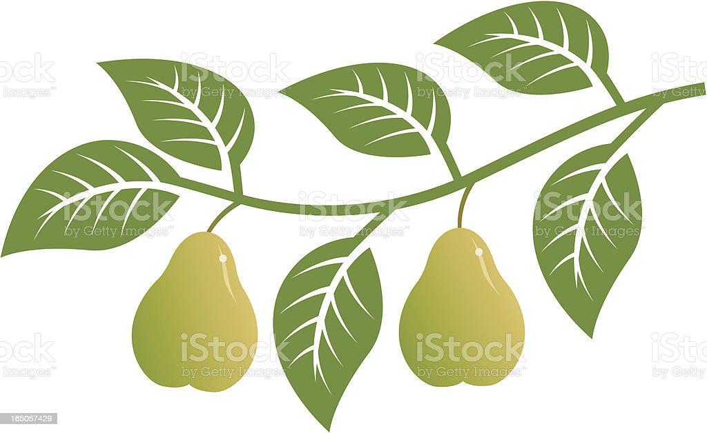 Pear branch royalty-free stock vector art